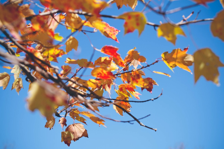 nature-leaves-fall-neature-large