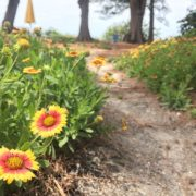 Wildflowers line the path on location at Bamboo during Coach Training.